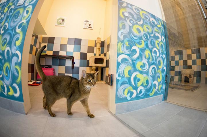 зоогостиница для кошек м