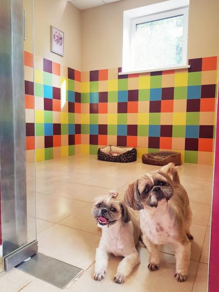 люкс для собак