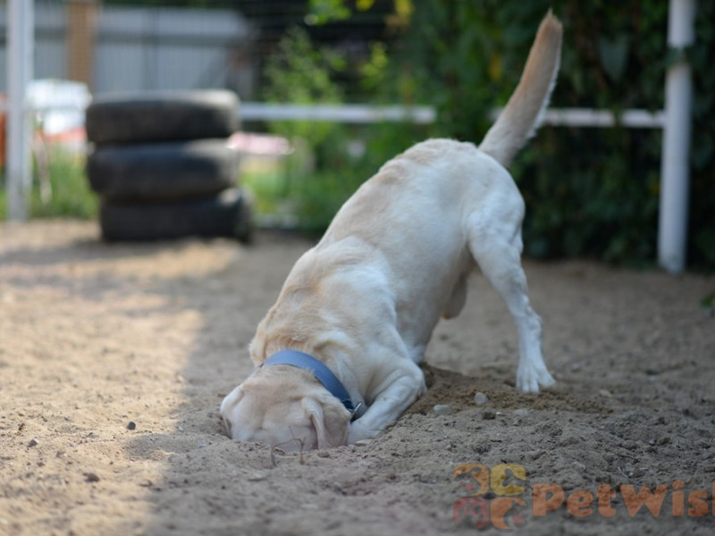 гостиница для собак в Щелково