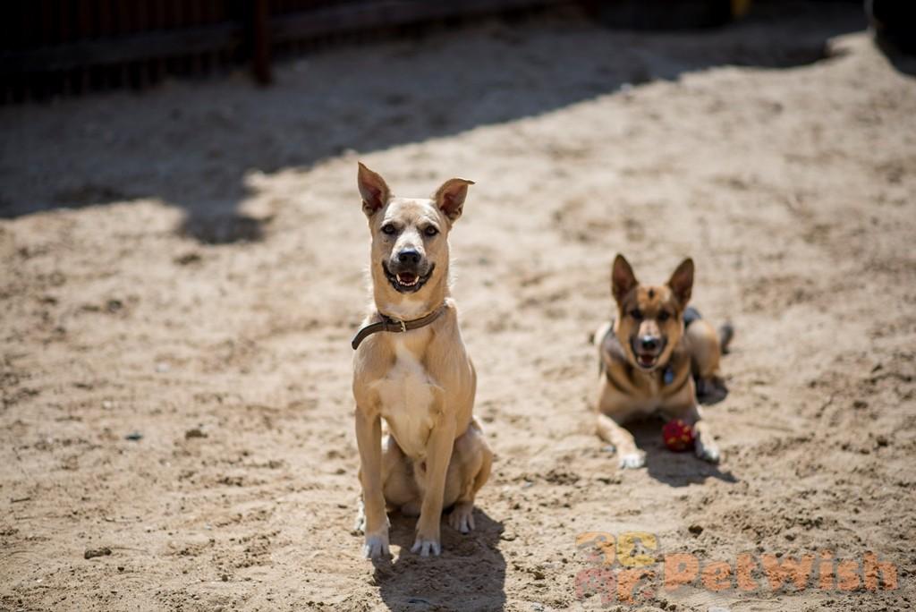 Дрессировка собак в щелково